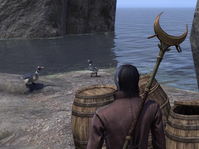 Wrothgarの鳥さん達